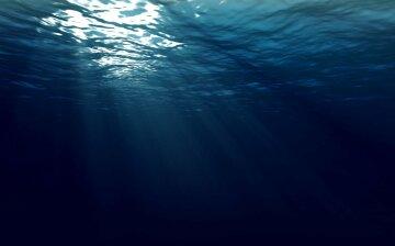 Ученые обнаружили неизвестное морское чудовище: «огромные выпуклые глаза»