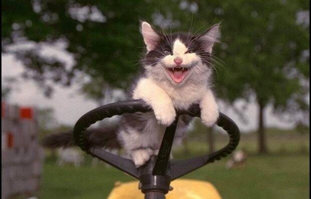 Вибуховий вівторок: найсмішніші анекдоти 7 липня