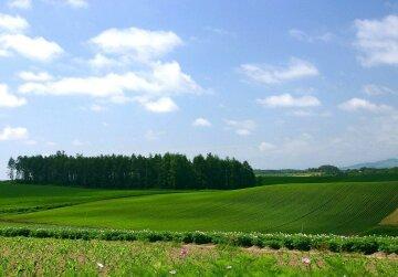 земля и поля