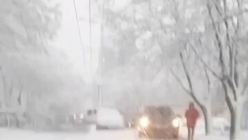 Негода накоїла бід в Одесі: повалені дерева, місто стоїть у заторах, кадри стихії