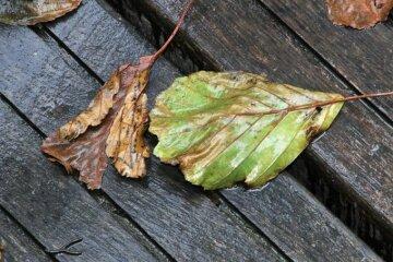 погода в ноябре, дождь, осень, прогноз погоды