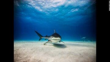 Екстремальні фото акул в їхньому середовищі існування: небезпечна краса (фото)