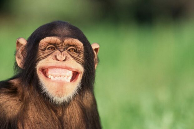 Смійтеся від душі: найкращі анекдоти 24 квітня