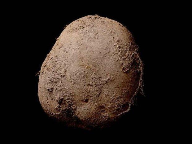 ирландский картофель фото за миллион евро