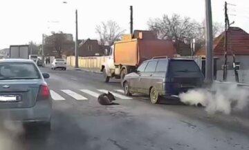 """""""Допомагати ніхто не збирається?"""": у Харкові збили вівчарку, водії безжально проїжджають повз, відео"""
