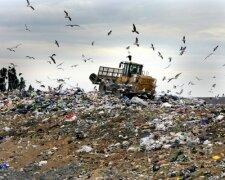экология, катастрофа, мусор