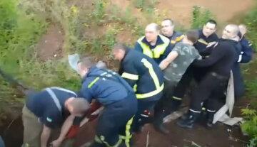 Корова попала в ловушку, 13 спасателей пришли ей на помощь: видео чудесного спасения