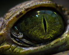 глаз, хищник, рептилия, монстр, чудище