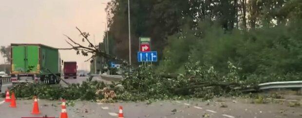 Ураган атаковал Киев, затоплены улицы и повалены деревья: видео масштабных разрушений