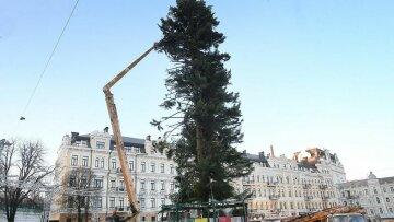 елка Украины