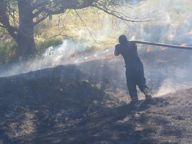 Масштабний вогонь охопив гектари в Києві: відео події