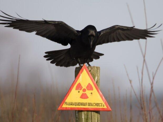 катастрофа, радиация, чернобыль