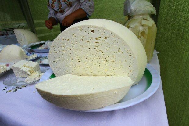 молочные продукты сыр брынза молоко