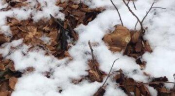 """""""Закрыл сезон"""": украинцы посреди снега в лесу находят белые грибы, фото"""