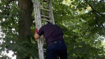 Підліток під Харковом забрався на 6-метрову липу і не міг злізти: деталі НП