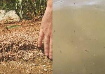 Після навали бліх українські пляжі всіяли мертві креветки: кадри з місця