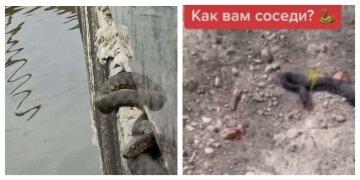 Харьковчане жалуются на нашествие змей в городе, неприятные кадры: где они обитают