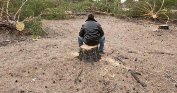 Лес уничтожают на Одесчине в разгар карантина: варварский поступок попал на камеру