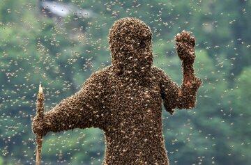 рой насекомых