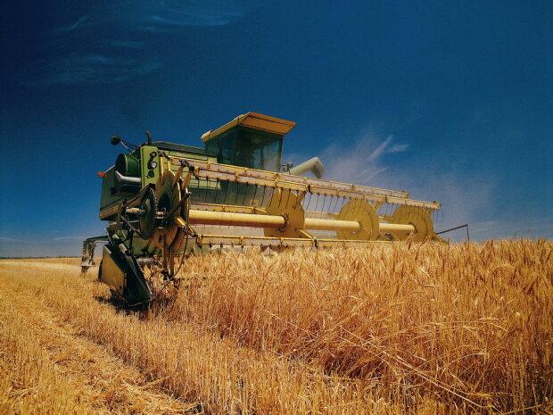 «Неприбыльное предприятие» - как коррупционные схемы разрушают аграрную отрасль в Украине