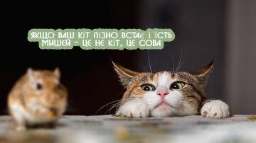ilustrasi-kucing-menangkap-tikus—istockphoto