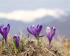 Погода в Украине 4 апреля