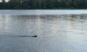 """Загадковий """"монстр"""" у Дніпрі налякав киян, фото: """"Хто це пливе?"""""""