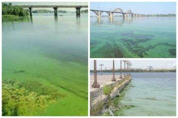Днепр на грани экологической катастрофы, в реке нашли опасные вещества: экологи бьют тревогу