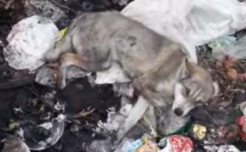 """""""Це вже не люди"""": підлітки побили беззахисного пса і викинули на смітник, дикі кадри"""