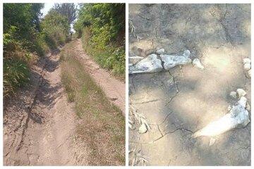 Дощі розмили кладовище на Одещині, оголивши поховання: останки розкидані посеред дороги