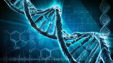 Учёные смогут извлечь «воспоминания» из клеток ДНК организма человека