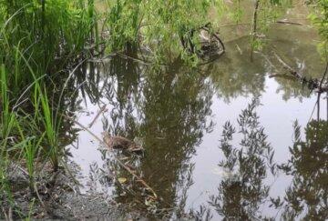 Экологическая катастрофа на киевском озере, вокруг лежат тушки уток и рыбы: кадры ЧП и что известно