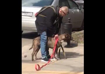 """В центре Одессы бойцовский пес сорвался с привязи и совершил нападение, видео: """"Хозяин пошел в магазин"""""""