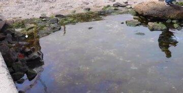 Новое ЧП всполошило экологов в Одессе: в сети показали, что происходит на берегу