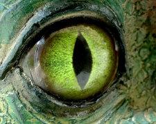 змея глаз