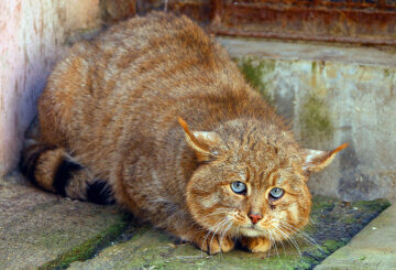 Девушка погладила бездомную кошку и тяжело заболела: «полностью парализовало»