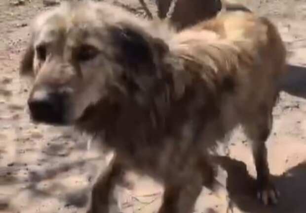 Пес из Харькова целый месяц добирался из нового дома к старым хозяевам: душещипательное видео