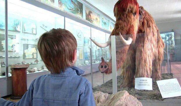 музей, мамонт