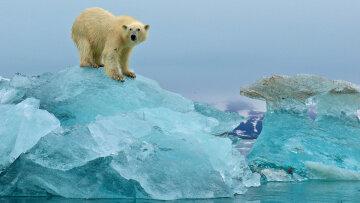 ледниковый период, медведь, лед