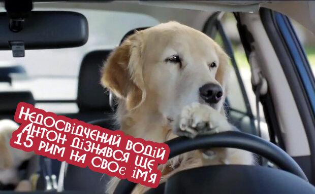 sobaka-za-rulyom-picture-big