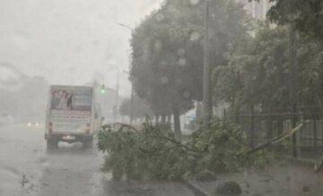 Непогода натворила бед в Украине, обесточены десятки населенных пунктов: детали ЧП