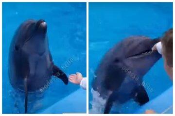 В Одессе дельфин набросился на ребенка после шоу, мальчика отвезли в больницу, видео