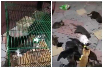 """""""Из 62  в живых осталось 26"""": в Одессе мать с сыном издевались над животными, видео"""