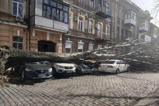 Сотни деревьев, дома и не только: как стихия потрепала Одессу, фото