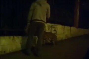 """Киянин вийшов на прогулянку з леопардом, з'явилося відео: """"аби вдома не сидіти"""""""