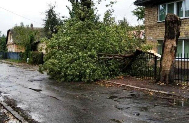 """Ураган обрушився на Київ, кадри лиха: """"повалено дерева і..."""""""