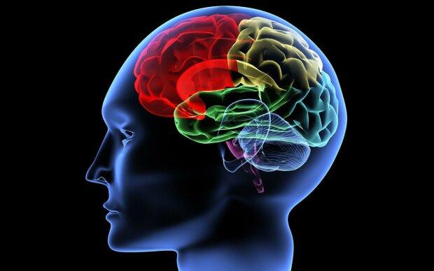 мозг, память