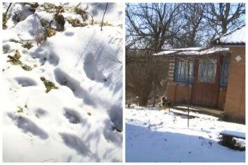 """Небезпечні хижаки атакували українське село, люди налякані: """"Перший раз таке побачили"""""""