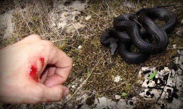 змея гадюка укус