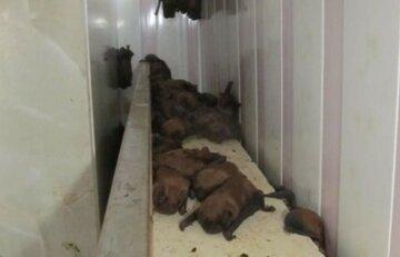 """Дикі тварини заселилися в харківському ВНЗ, кадри: """"після втамування спраги вони..."""""""